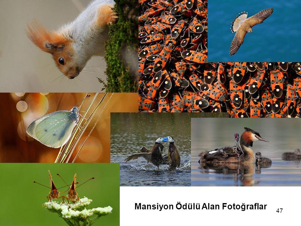 47 Mansiyon Ödülü Alan Fotoğraflar