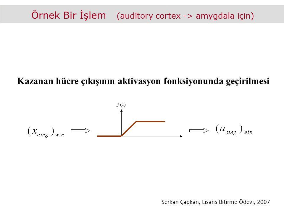 Örnek Bir İşlem (auditory cortex -> amygdala için) Kazanan hücre çıkışının aktivasyon fonksiyonunda geçirilmesi Serkan Çapkan, Lisans Bitirme Ödevi, 2