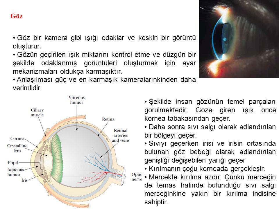 Göz Göz bir kamera gibi ışığı odaklar ve keskin bir görüntü oluşturur. Gözün geçirilen ışık miktarını kontrol etme ve düzgün bir şekilde odaklanmış gö
