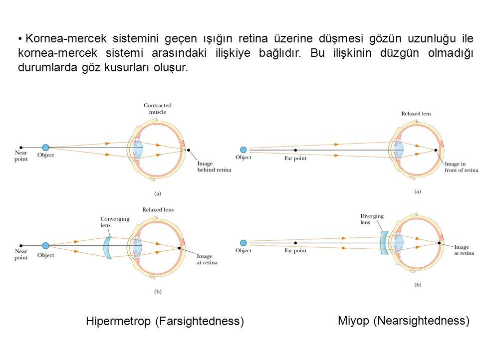 Kornea-mercek sistemini geçen ışığın retina üzerine düşmesi gözün uzunluğu ile kornea-mercek sistemi arasındaki ilişkiye bağlıdır. Bu ilişkinin düzgün