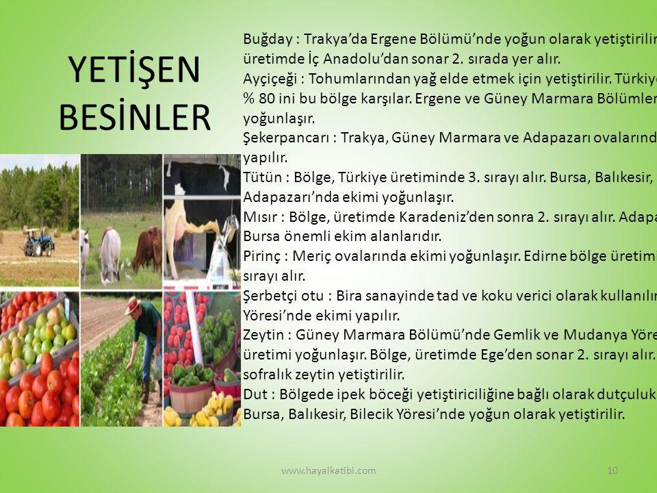 YETİŞEN BESİNLER Buğday : Trakya'da Ergene Bölümü'nde yoğun olarak yetiştirilir.