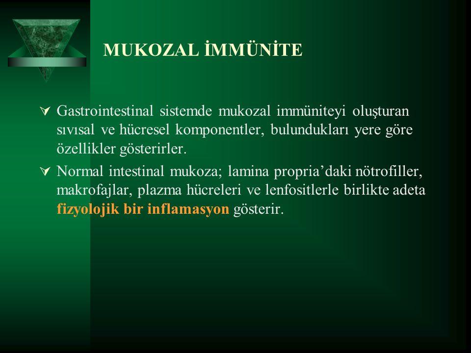 MUKOZAL İMMÜNİTE  Gastrointestinal sistemde mukozal immüniteyi oluşturan sıvısal ve hücresel komponentler, bulundukları yere göre özellikler gösterirler.