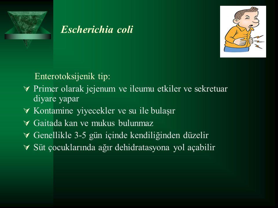 Escherichia coli Enterotoksijenik tip:  Primer olarak jejenum ve ileumu etkiler ve sekretuar diyare yapar  Kontamine yiyecekler ve su ile bulaşır  Gaitada kan ve mukus bulunmaz  Genellikle 3-5 gün içinde kendiliğinden düzelir  Süt çocuklarında ağır dehidratasyona yol açabilir
