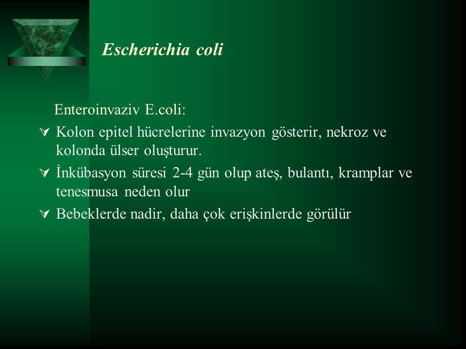 Escherichia coli Enteroinvaziv E.coli:  Kolon epitel hücrelerine invazyon gösterir, nekroz ve kolonda ülser oluşturur.