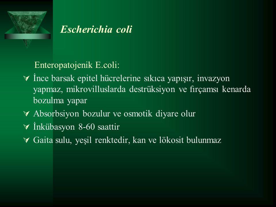 Escherichia coli Enteropatojenik E.coli:  İnce barsak epitel hücrelerine sıkıca yapışır, invazyon yapmaz, mikrovilluslarda destrüksiyon ve fırçamsı kenarda bozulma yapar  Absorbsiyon bozulur ve osmotik diyare olur  İnkübasyon 8-60 saattir  Gaita sulu, yeşil renktedir, kan ve lökosit bulunmaz
