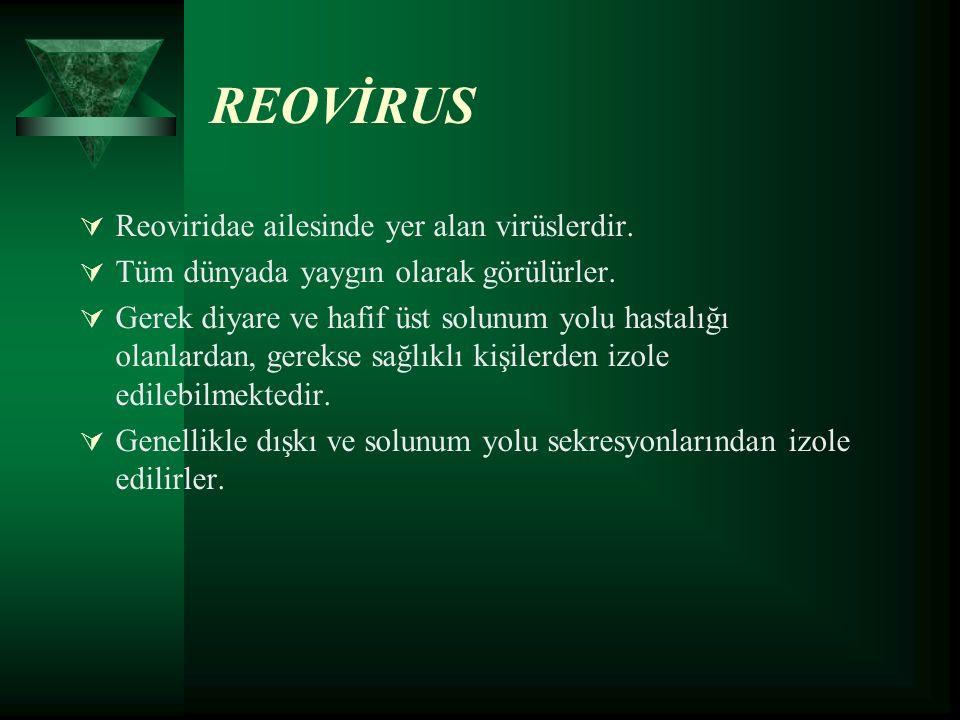 REOVİRUS  Reoviridae ailesinde yer alan virüslerdir.