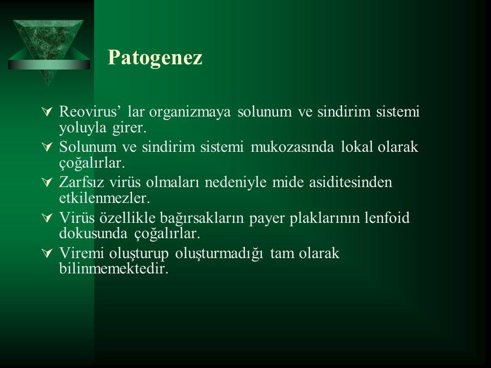 Patogenez  Reovirus' lar organizmaya solunum ve sindirim sistemi yoluyla girer.
