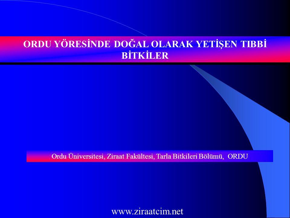 GİRİŞ Türkiye bitki türü zenginliği ve endemik bitkiler bakımından dünyanın sayılı ülkelerinden birisidir.