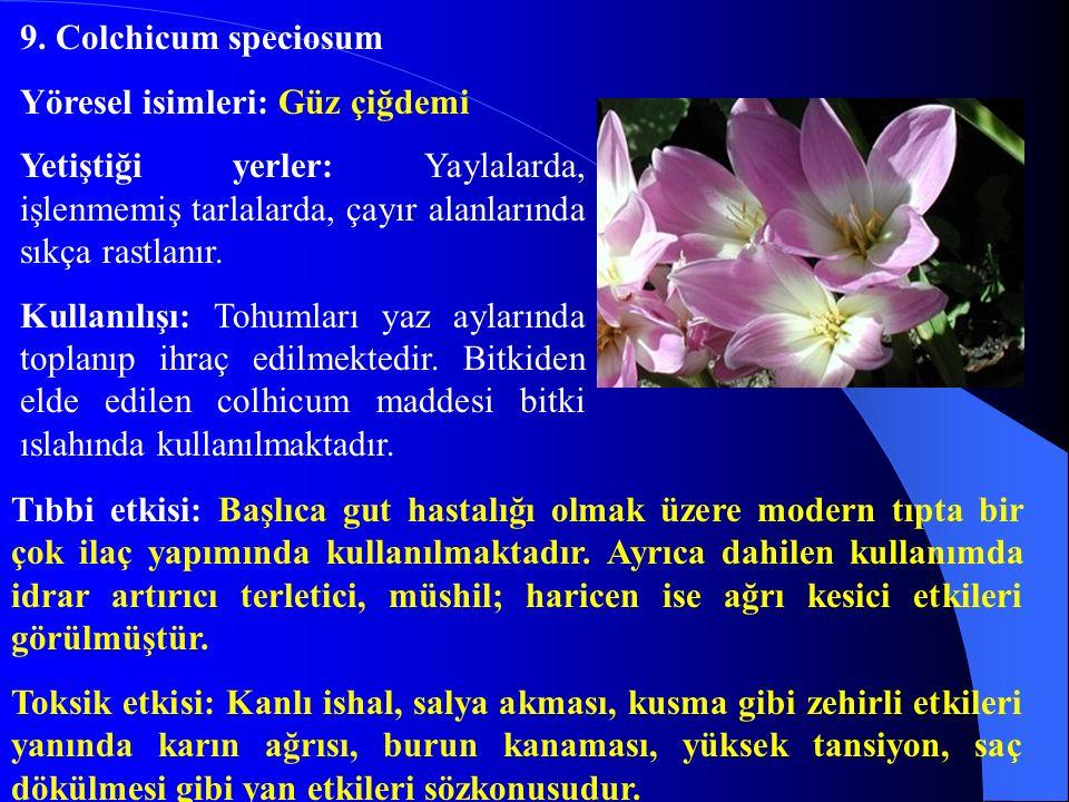 9. Colchicum speciosum Yöresel isimleri: Güz çiğdemi Yetiştiği yerler: Yaylalarda, işlenmemiş tarlalarda, çayır alanlarında sıkça rastlanır. Kullanılı
