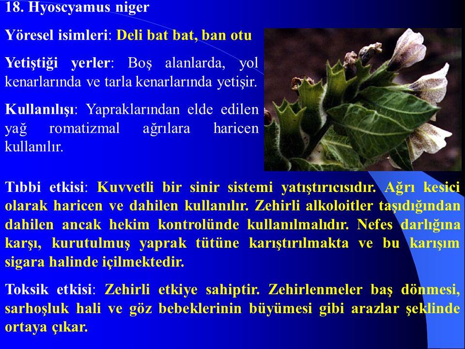 18. Hyoscyamus niger Yöresel isimleri: Deli bat bat, ban otu Yetiştiği yerler: Boş alanlarda, yol kenarlarında ve tarla kenarlarında yetişir. Kullanıl