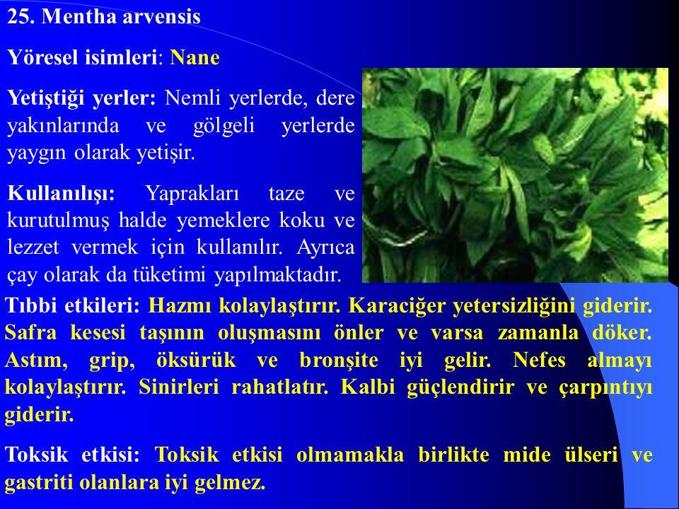 25. Mentha arvensis Yöresel isimleri: Nane Yetiştiği yerler: Nemli yerlerde, dere yakınlarında ve gölgeli yerlerde yaygın olarak yetişir. Kullanılışı: