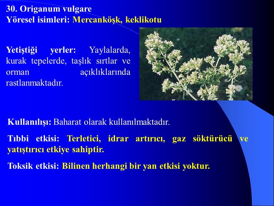 Yetiştiği yerler: Yaylalarda, kurak tepelerde, taşlık sırtlar ve orman açıklıklarında rastlanmaktadır. Kullanılışı: Baharat olarak kullanılmaktadır. T