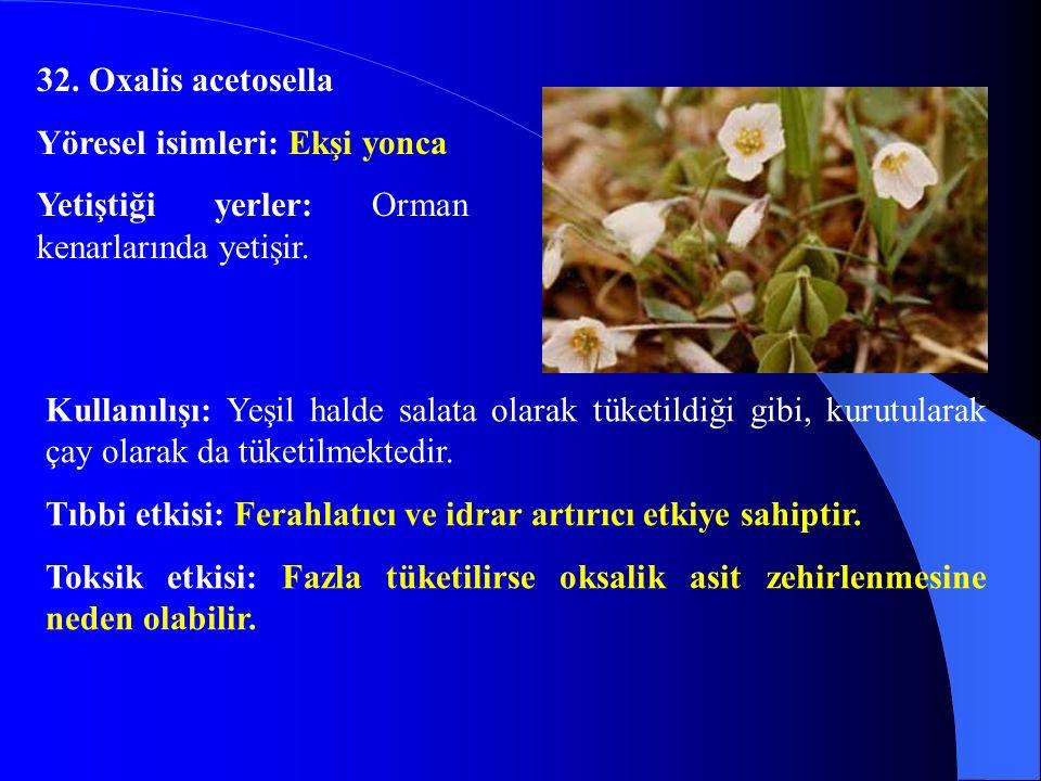 32. Oxalis acetosella Yöresel isimleri: Ekşi yonca Yetiştiği yerler: Orman kenarlarında yetişir. Kullanılışı: Yeşil halde salata olarak tüketildiği gi