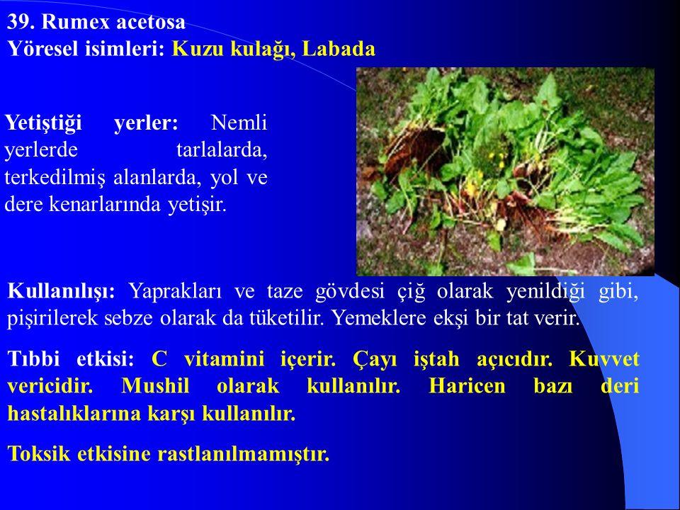 Yetiştiği yerler: Nemli yerlerde tarlalarda, terkedilmiş alanlarda, yol ve dere kenarlarında yetişir. Kullanılışı: Yaprakları ve taze gövdesi çiğ olar
