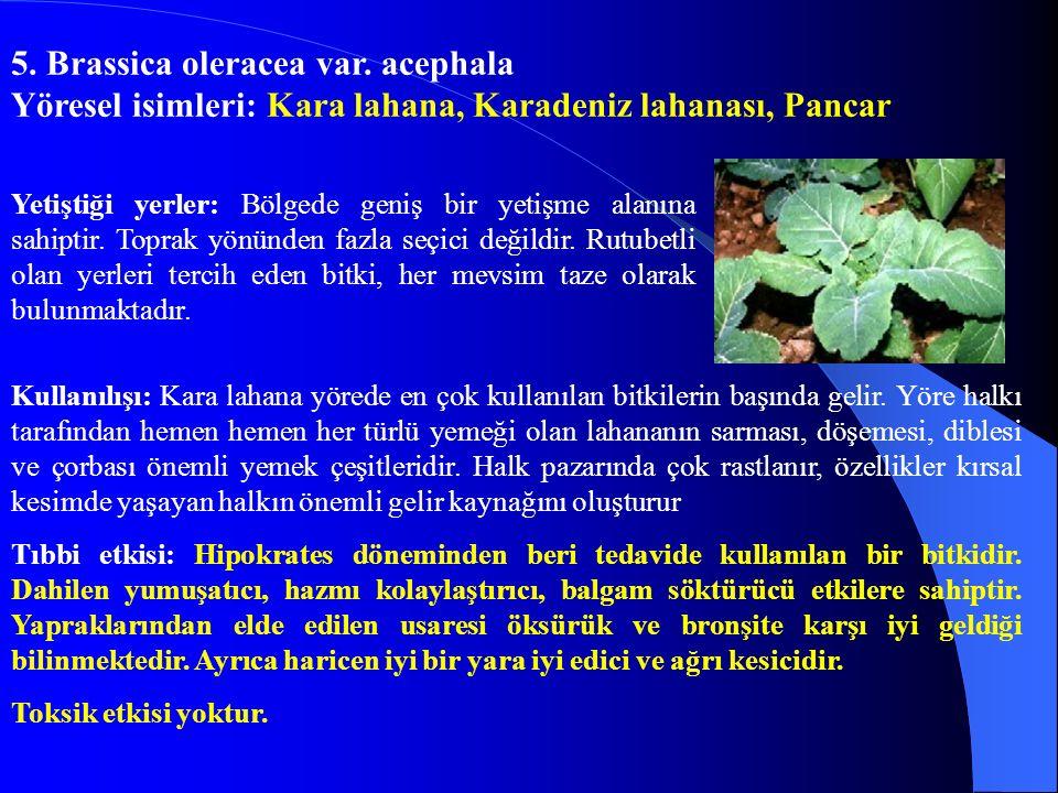 16.Helianthus tuberasus Yöresel isimleri: Yer elması Yetiştiği yerler: Sebze yetiştirilen bahçelerde yetişir.