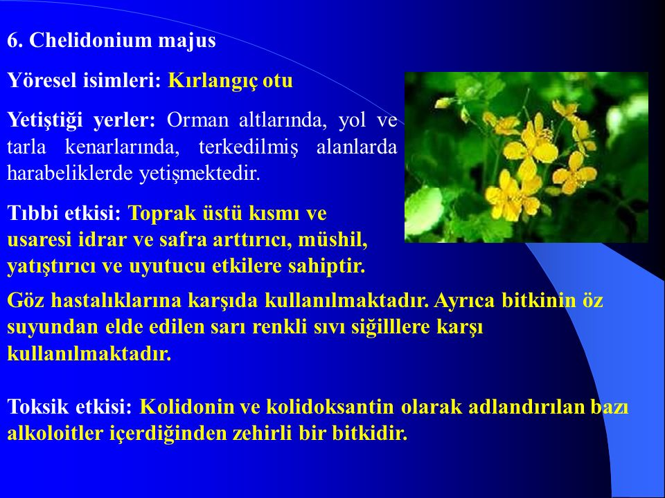 47.Urtica dioica Yöresel adı: Isırgan otu Yetiştiği yerler: Bölgede yılın her mevsiminde bulunur.