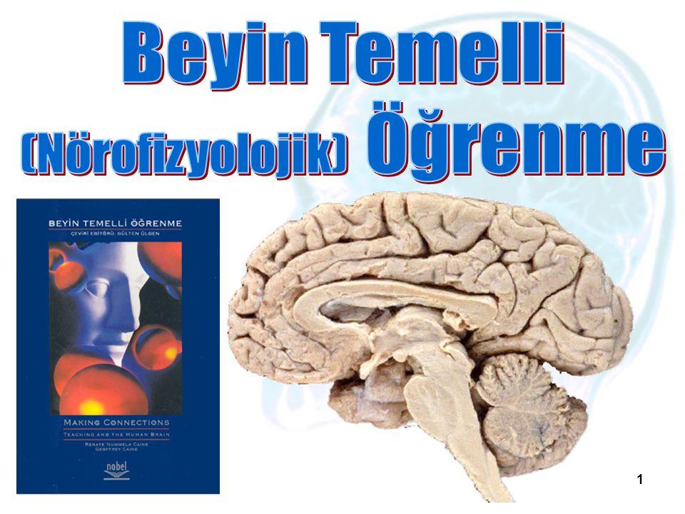 12 Beyinin yapısı Beyin hücreleri: İki türlü beyin hücresi bulunmaktadır.