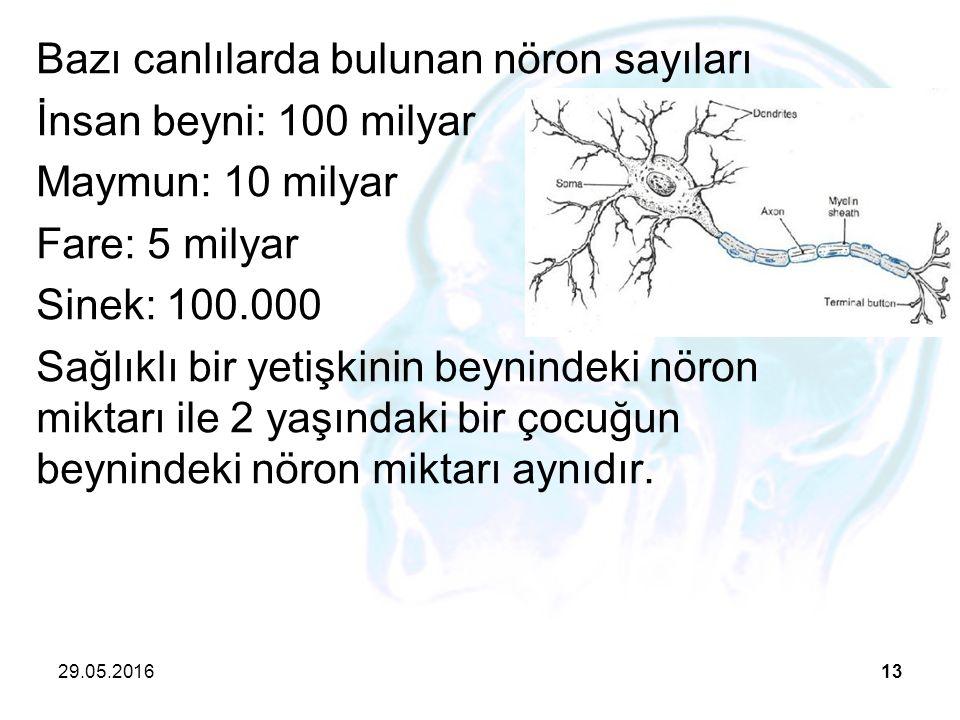 Bazı canlılarda bulunan nöron sayıları İnsan beyni: 100 milyar Maymun: 10 milyar Fare: 5 milyar Sinek: 100.000 Sağlıklı bir yetişkinin beynindeki nöron miktarı ile 2 yaşındaki bir çocuğun beynindeki nöron miktarı aynıdır.