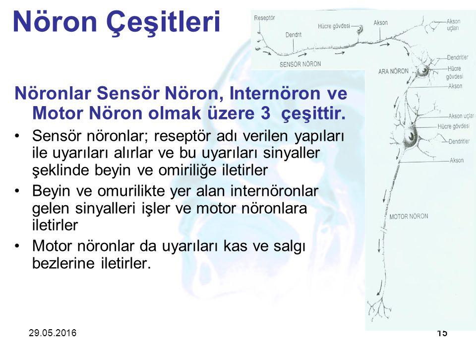 29.05.201615 Nöronlar Sensör Nöron, Internöron ve Motor Nöron olmak üzere 3 çeşittir. Sensör nöronlar; reseptör adı verilen yapıları ile uyarıları alı