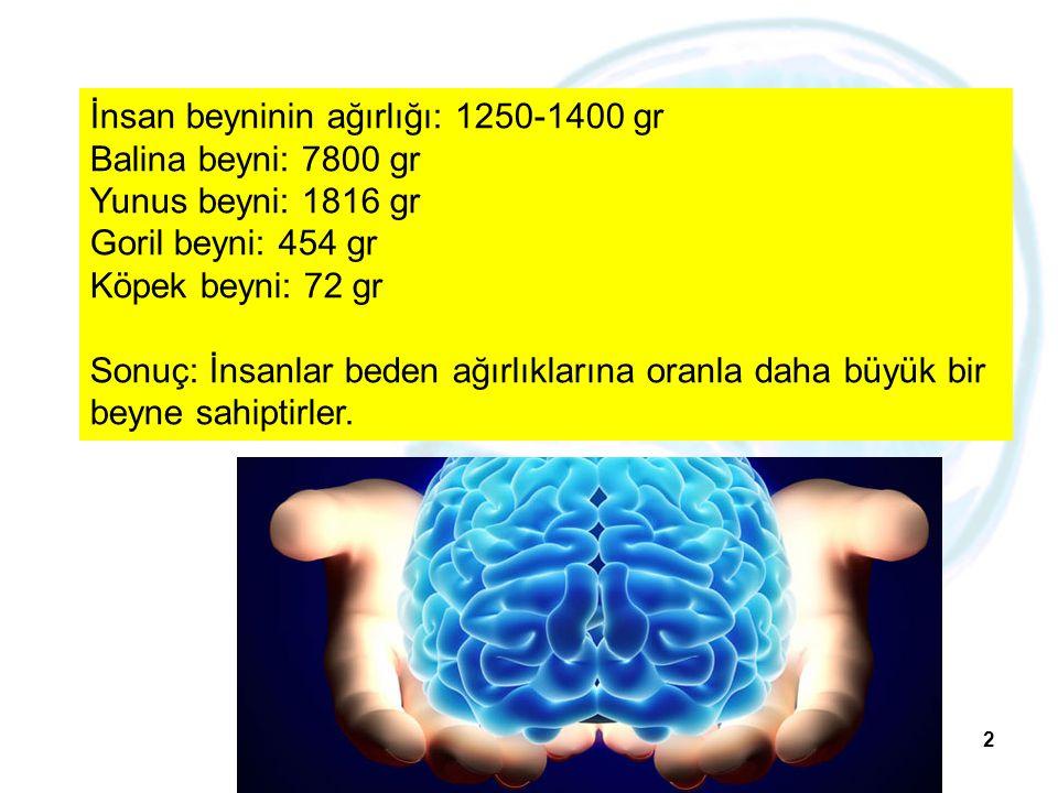 2 İnsan beyninin ağırlığı: 1250-1400 gr Balina beyni: 7800 gr Yunus beyni: 1816 gr Goril beyni: 454 gr Köpek beyni: 72 gr Sonuç: İnsanlar beden ağırlı