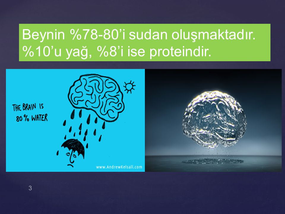 3 Beynin %78-80'i sudan oluşmaktadır. %10'u yağ, %8'i ise proteindir.