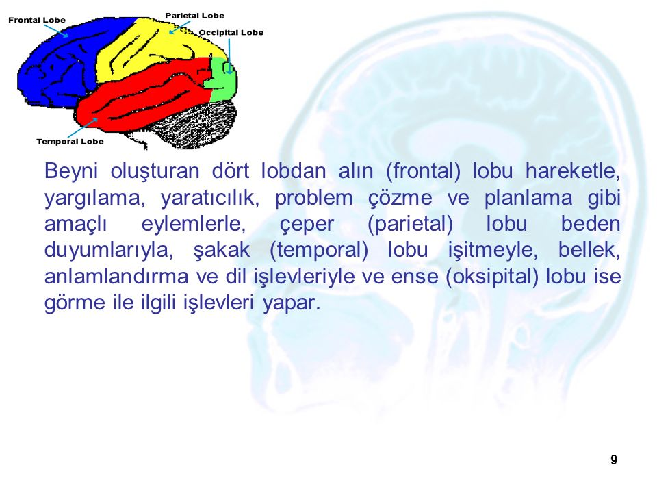 9 Beyni oluşturan dört lobdan alın (frontal) lobu hareketle, yargılama, yaratıcılık, problem çözme ve planlama gibi amaçlı eylemlerle, çeper (parietal) lobu beden duyumlarıyla, şakak (temporal) lobu işitmeyle, bellek, anlamlandırma ve dil işlevleriyle ve ense (oksipital) lobu ise görme ile ilgili işlevleri yapar.