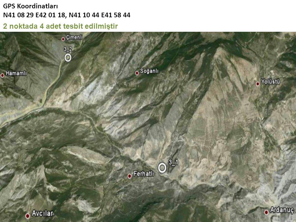 GPS Koordinatları N41 08 29 E42 01 18, N41 10 44 E41 58 44 2 noktada 4 adet tesbit edilmiştir