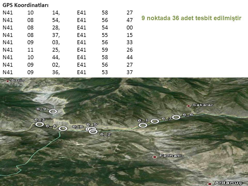 GPS Koordinatları N411014,E415827 N410854,E415647 N410828,E415400 N410837,E415515 N410903,E415633 N411125,E415926 N411044,E415844 N410902,E415627 N410936,E415337 9 noktada 36 adet tesbit edilmiştir