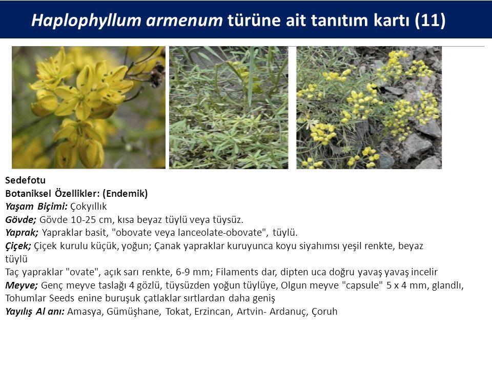 Haplophyllum armenum türüne ait tanıtım kartı (11) Sedefotu Botaniksel Özellikler: (Endemik) Yaşam Biçimi: Çokyıllık Gövde; Gövde 10-25 cm, kısa beyaz tüylü veya tüysüz.