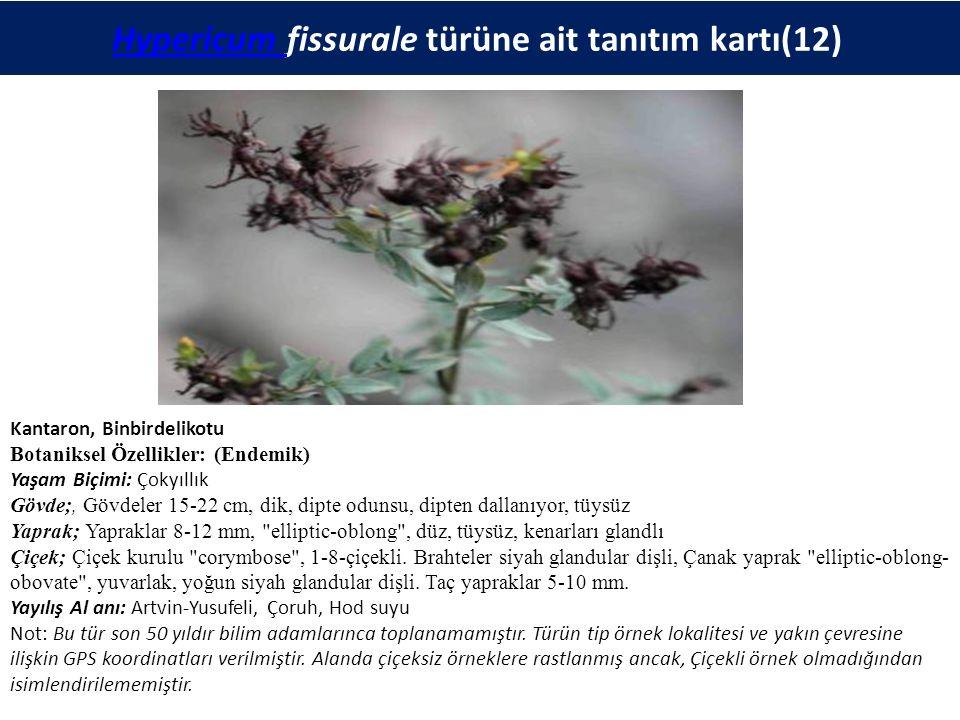 Hypericum fissurale türüne ait tanıtım kartı(12)Hypericum Kantaron, Binbirdelikotu Botaniksel Özellikler: (Endemik) Yaşam Biçimi: Çokyıllık Gövde;, Gövdeler 15-22 cm, dik, dipte odunsu, dipten dallanıyor, tüysüz Yaprak; Yapraklar 8-12 mm, elliptic-oblong , düz, tüysüz, kenarları glandlı Çiçek; Çiçek kurulu corymbose , 1-8-çiçekli.