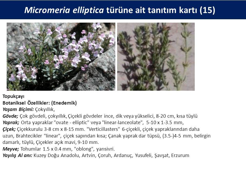 Micromeria elliptica türüne ait tanıtım kartı (15) Topukçayı Botaniksel Özellikler: (Enedemik) Yaşam Biçimi: Çokyıllık, Gövde; Çok gövdeli, çokyıllık, Çiçekli gövdeler ince, dik veya yükselici, 8-20 cm, kısa tüylü Yaprak; Orta yapraklar ovate - elliptic veya linear-lanceolate , 5-10 x 1-3.5 mm, Çiçek; Çiçekkurulu 3-8 cm x 8-15 mm.