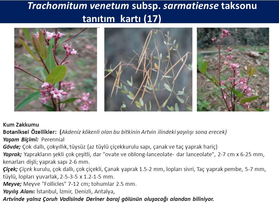Trachomitum venetum subsp. sarmatiense taksonu tanıtım kartı (17) Kum Zakkumu Botaniksel Özellikler: (Akdeniz kökenli olan bu bitkinin Artvin ilindeki