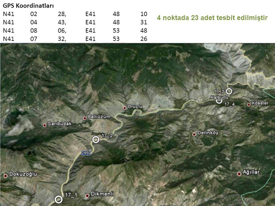 GPS Koordinatları N410228,E414810 N410443,E414831 N410806,E415348 N410732,E415326 4 noktada 23 adet tesbit edilmiştir