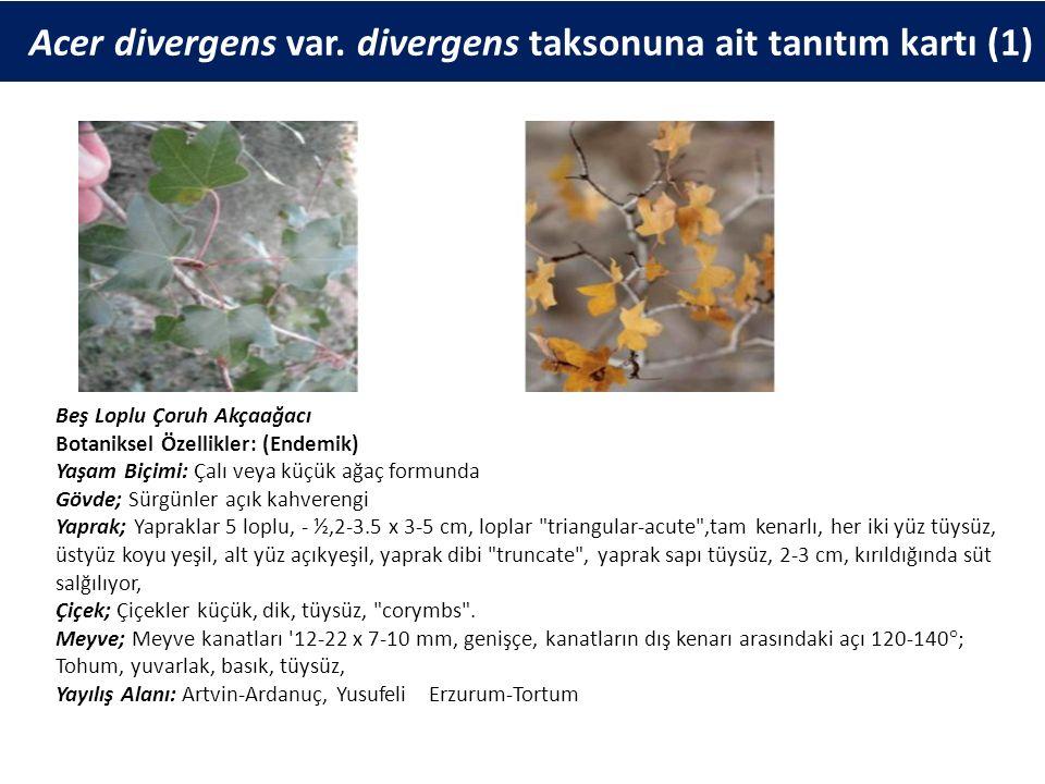 Acer divergens var. divergens taksonuna ait tanıtım kartı (1) Beş Loplu Çoruh Akçaağacı Botaniksel Özellikler: (Endemik) Yaşam Biçimi: Çalı veya küçük