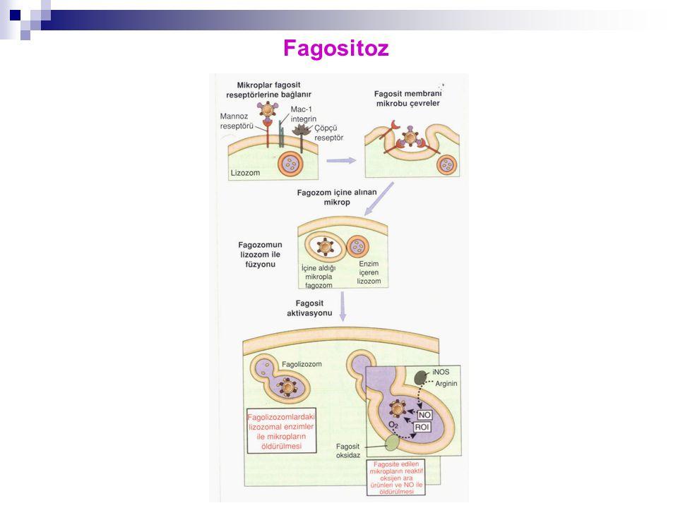 Fagositoz
