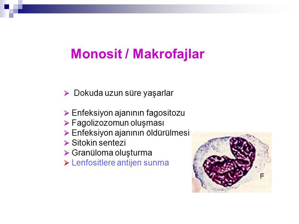 Monosit / Makrofajlar  Dokuda uzun süre yaşarlar  Enfeksiyon ajanının fagositozu  Fagolizozomun oluşması  Enfeksiyon ajanının öldürülmesi  Sitoki