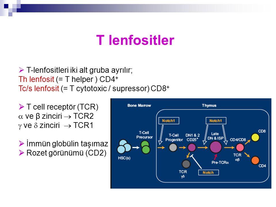 T lenfositler  T-lenfositleri iki alt gruba ayrılır; Th lenfosit (= T helper ) CD4 + Tc/s lenfosit (= T cytotoxic / supressor) CD8 +  T cell receptö