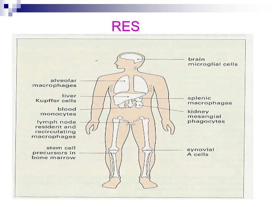 RES RES 