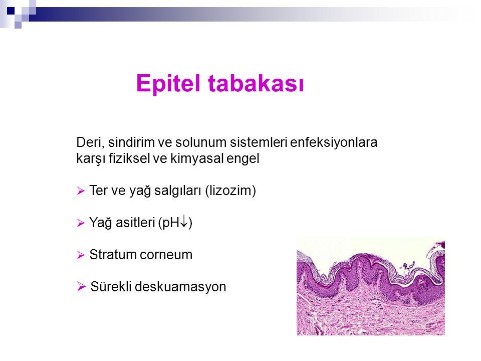 Epitel tabakası Deri, sindirim ve solunum sistemleri enfeksiyonlara karşı fiziksel ve kimyasal engel  Ter ve yağ salgıları (lizozim)  Yağ asitleri (
