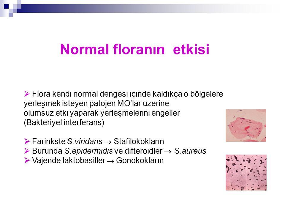 Normal floranın etkisi  Flora kendi normal dengesi içinde kaldıkça o bölgelere yerleşmek isteyen patojen MO'lar üzerine olumsuz etki yaparak yerleşme