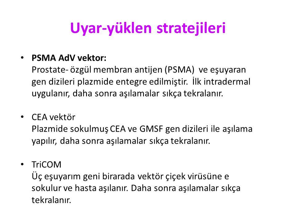 Uyar-yüklen stratejileri PSMA AdV vektor: Prostate- özgül membran antijen (PSMA) ve eşuyaran gen dizileri plazmide entegre edilmiştir. İlk intradermal