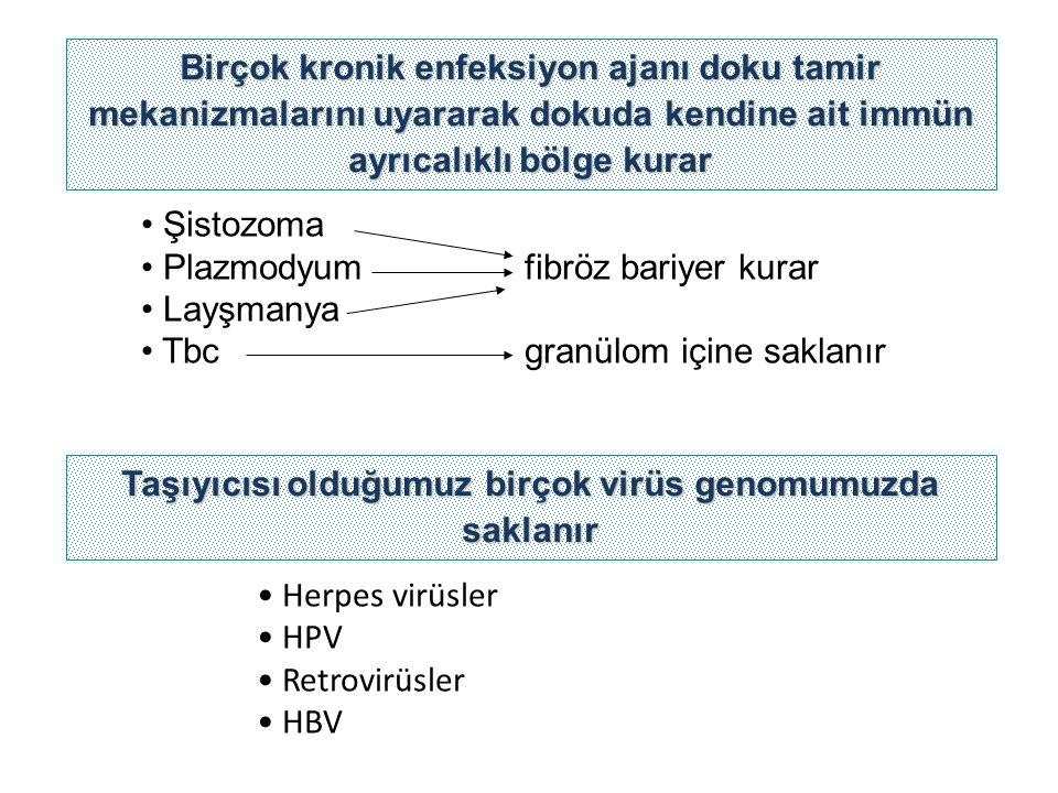 Şistozoma Plazmodyum fibröz bariyer kurar Layşmanya Tbc granülom içine saklanır Birçok kronik enfeksiyon ajanı doku tamir mekanizmalarını uyararak dok