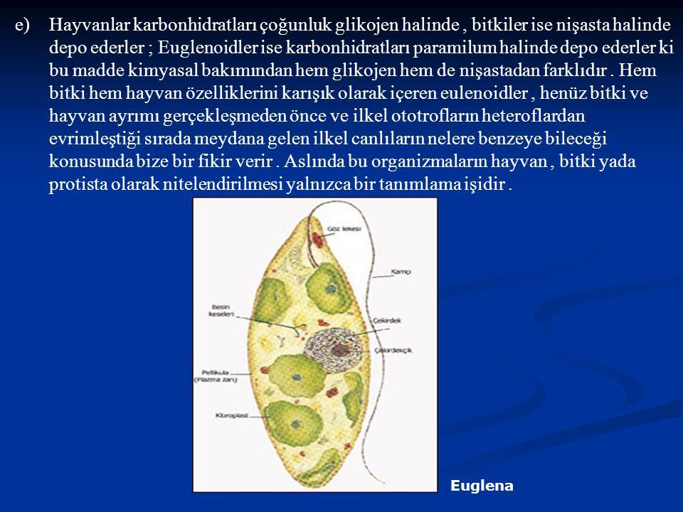 e)Hayvanlar karbonhidratları çoğunluk glikojen halinde, bitkiler ise nişasta halinde depo ederler ; Euglenoidler ise karbonhidratları paramilum halind