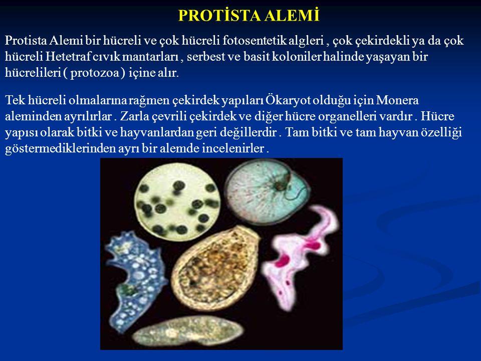 PROTİSTA ALEMİ Protista Alemi bir hücreli ve çok hücreli fotosentetik algleri, çok çekirdekli ya da çok hücreli Hetetraf cıvık mantarları, serbest ve