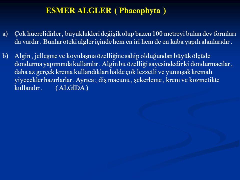 ESMER ALGLER ( Phaeophyta ) a)Çok hücrelidirler, büyüklükleri değişik olup bazen 100 metreyi bulan dev formları da vardır. Bunlar öteki algler içinde