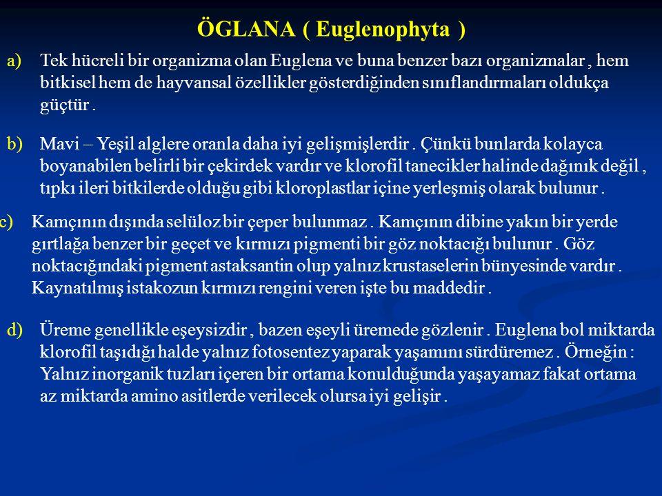 ÖGLANA ( Euglenophyta ) a)Tek hücreli bir organizma olan Euglena ve buna benzer bazı organizmalar, hem bitkisel hem de hayvansal özellikler gösterdiği