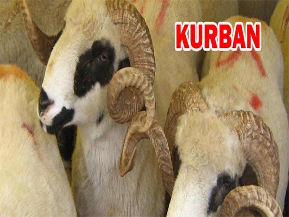 5) Kısırlaştırılmış hayvanlar kurban edilebilir mi.