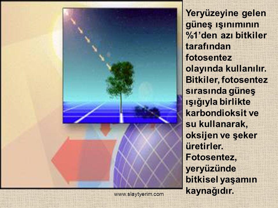 www.slaytyerim.com Yeryüzeyine gelen güneş ışınımının %1'den azı bitkiler tarafından fotosentez olayında kullanılır.