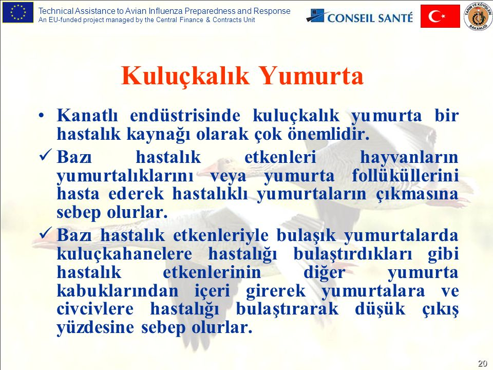 Technical Assistance to Avian Influenza Preparedness and Response An EU-funded project managed by the Central Finance & Contracts Unit 20 Kanatlı endüstrisinde kuluçkalık yumurta bir hastalık kaynağı olarak çok önemlidir.