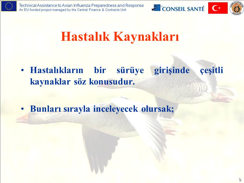Technical Assistance to Avian Influenza Preparedness and Response An EU-funded project managed by the Central Finance & Contracts Unit 9 Hastalıkların bir sürüye girişinde çeşitli kaynaklar söz konusudur.